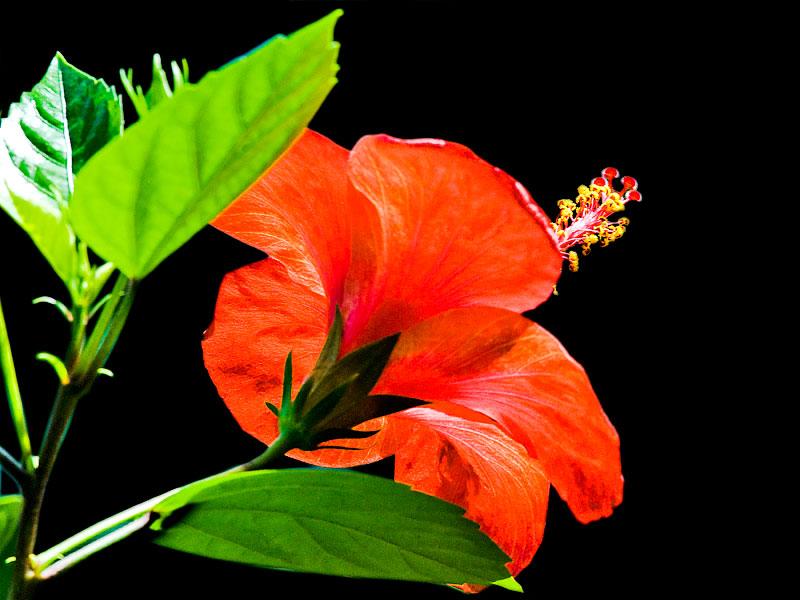 Cách cắm hoa ngày rằm