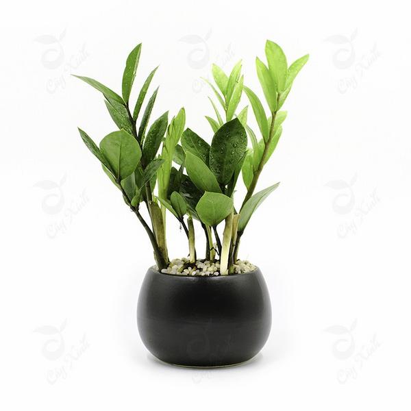 cay-xanh-phong-thuy-ban-lam-viec (5)