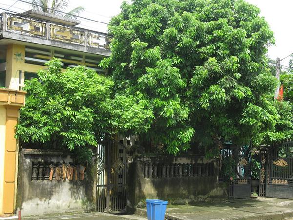 Lưu ý khi chọn cây phong thủy trồng trước nhà