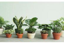Điểm danh các loại cây trồng trong nhà theo phong thủy được ưa chuộng nhất