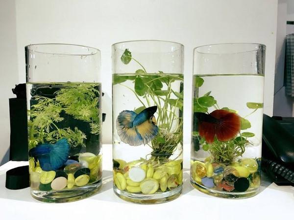 Bể cá cảnh để bàn phong thủy