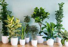 Các loại cây trồng trong nhà tốt cho sức khỏe