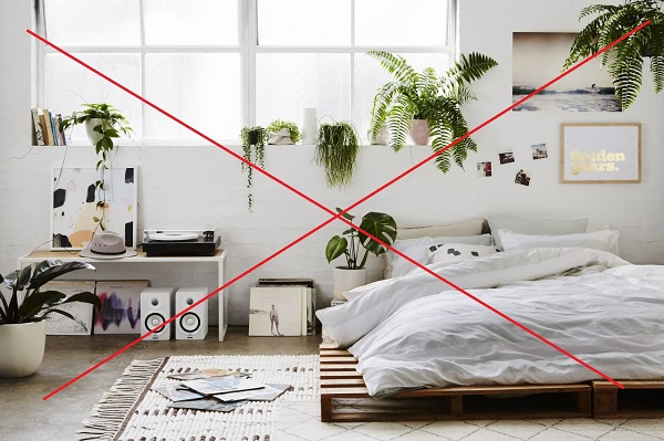 Vì sao không nên để cây xanh trong phòng ngủ?